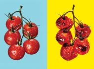 A conversa definitiva sobre alimentação ideal
